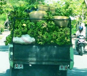 Bananas Going To Market