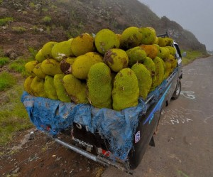 Jackfruit On The Way To Market