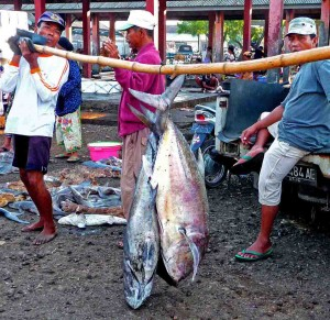 Tanjung Luar Fish Market - Fresh Tuna