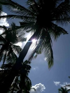 Lombok Palms In Paradise