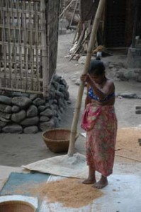 Lombok Traditional Rice Threshing