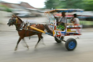 Cidomo (Local Transport In Lombok)